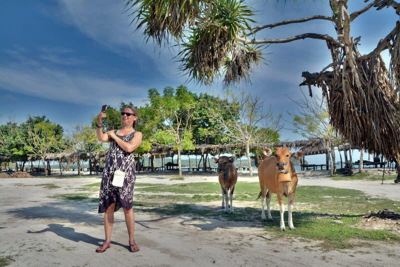 De Kaukasische vrouw neemt selfie met koeien onder de blauwe hemel in Vietnam stock afbeeldingen