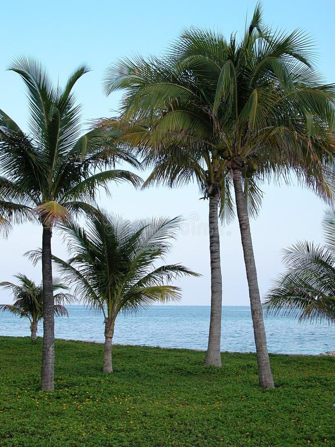 In de Keerkringen: Palmen