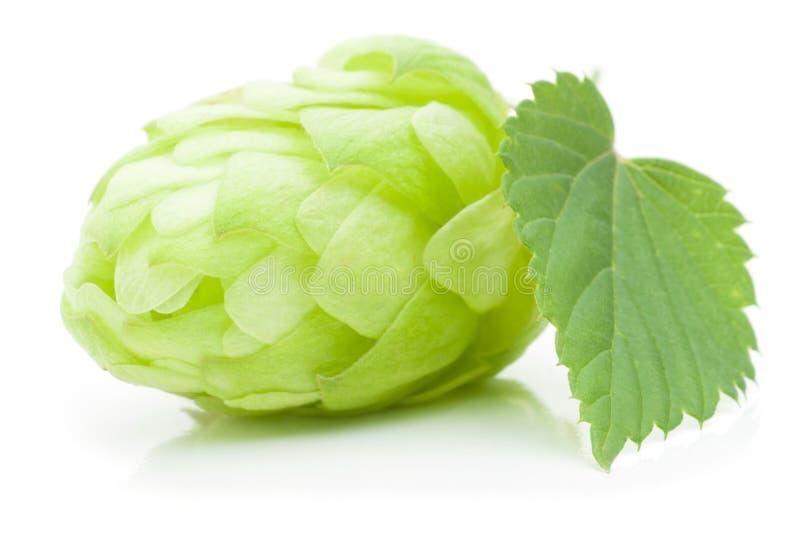 De kegel van de hop royalty-vrije stock foto's