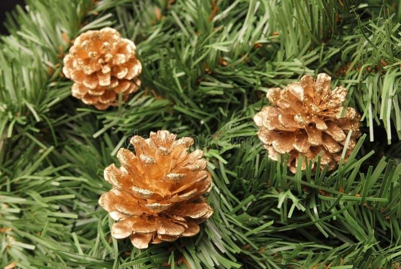 De kegels van Kerstmis op spar stock foto's