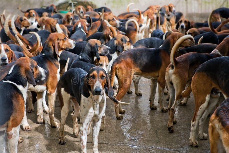 De kennel van jachthonden in Chateau Cheverny, Frankrijk royalty-vrije stock foto's