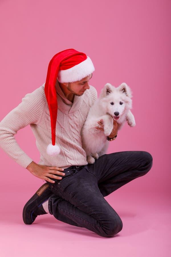 De kerel boog en houdt samoyed één hand op een roze achtergrond stock foto