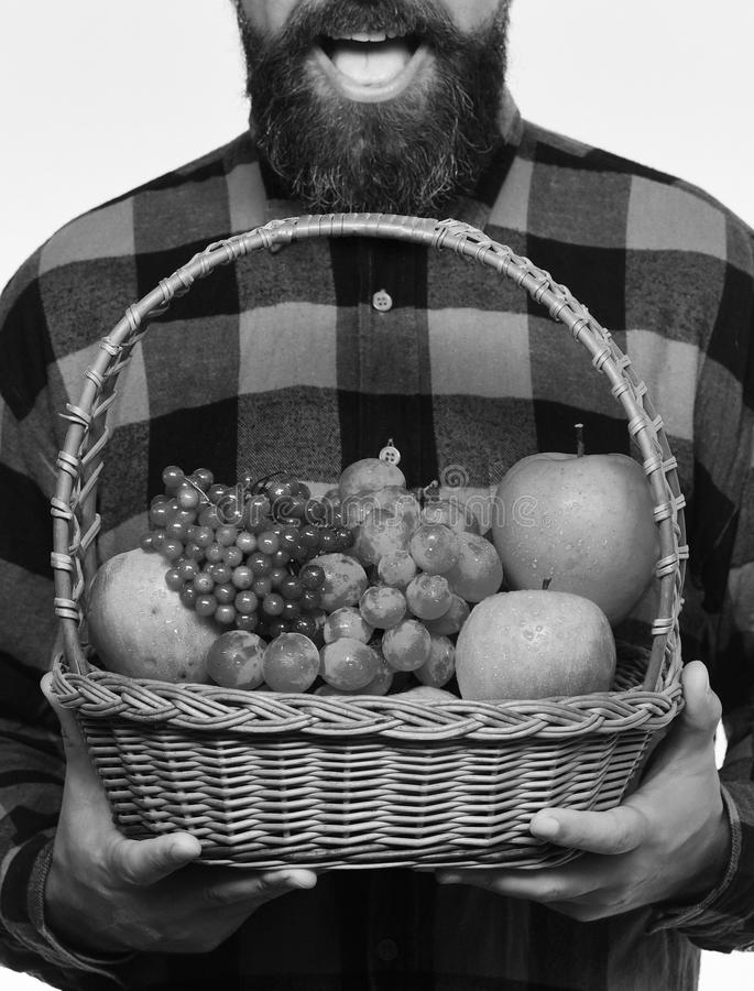 De kerel houdt inlands de de oogst Landbouw en herfst gewassenconcept De mens met baard houdt mand royalty-vrije stock afbeeldingen