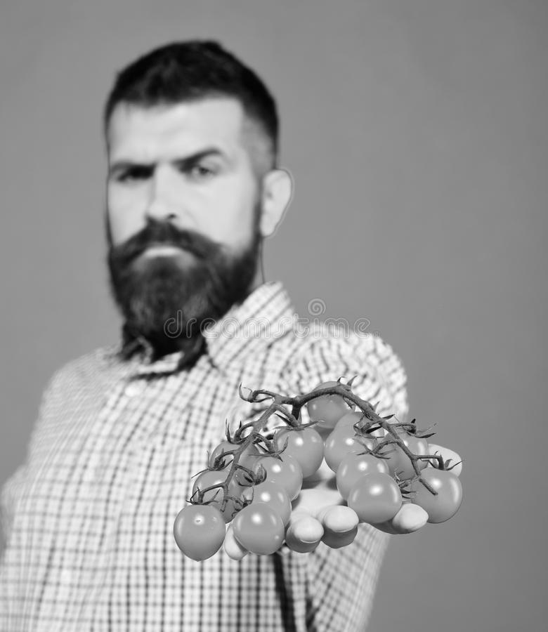 De kerel houdt de inlands oogst Landbouw en de herfstconcept De mens met baard houdt rode bessen stock foto's