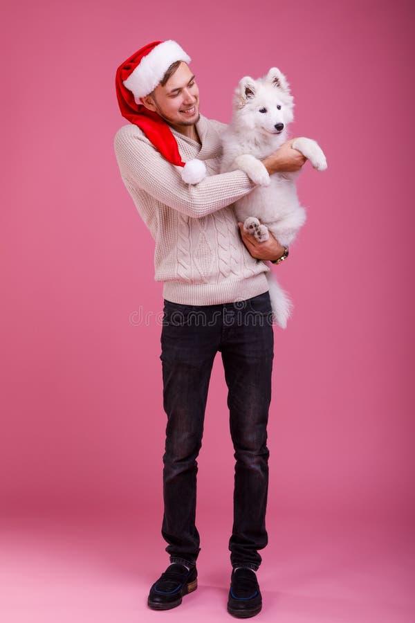 De kerel houdt a in zijn handen samoyed en bekijkt hem op een roze achtergrond stock foto's