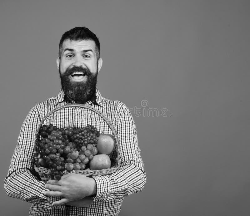 De kerel houdt zijn oogst Bewerkend en het tuinieren concept De landbouwer met vrolijk gezicht stelt appelen, druiven en Amerikaa stock afbeeldingen
