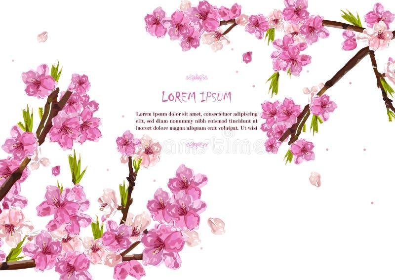 De kers bloeit Vector Van de de achtergrond lentekaart decors vector illustratie