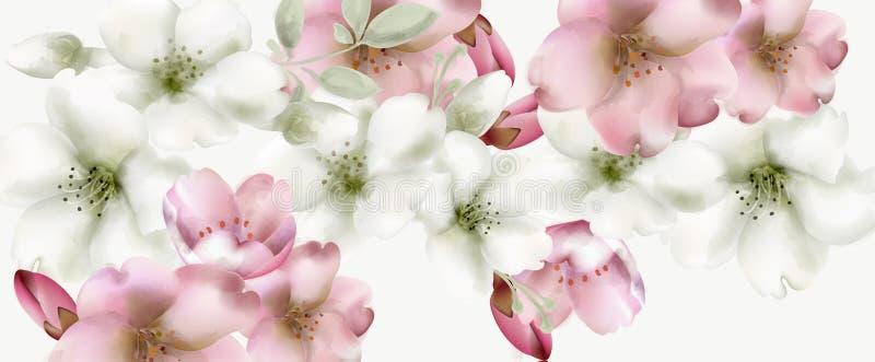 De kers bloeit waterverfvector De gevoelige achtergronden van de de lentebloesem royalty-vrije illustratie