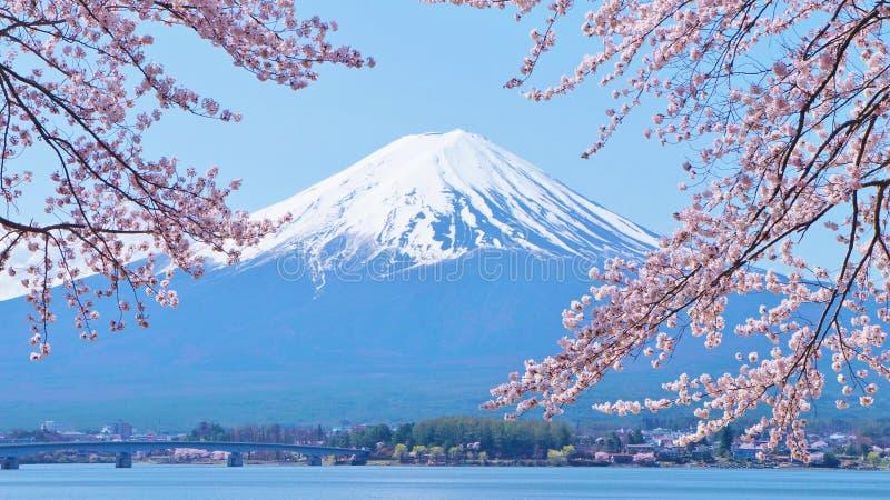 De kers-bloesems en zetten Fuji op die van Laka Kawaguchiko in Yamanashi, Japan worden bekeken royalty-vrije stock foto's