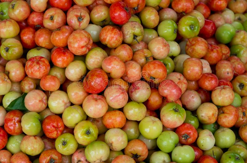 De kers of cerise fruit in keerkringen wordt gekweekt die royalty-vrije stock afbeeldingen