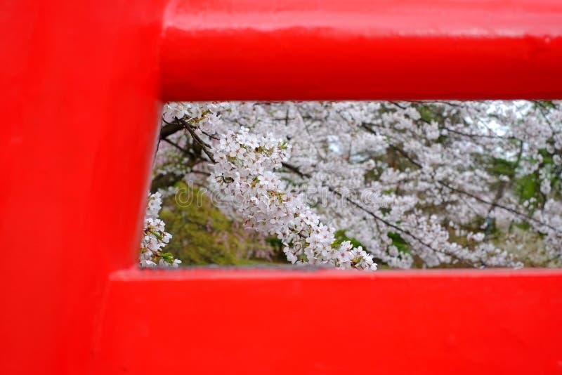 De kers komt, sakura in Japanner tot bloei, door rode brug in Japan wordt gezien dat stock afbeeldingen