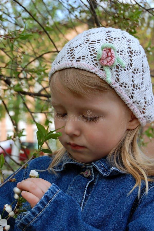 De kersen in bloei stock foto