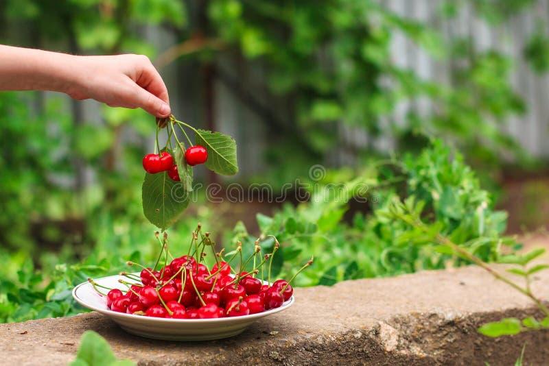 De kersen, fruitbessen, oogsten rijpe en sappige vruchten Hoogste exemplaarruimte De achtergrond van het voedsel stock foto's