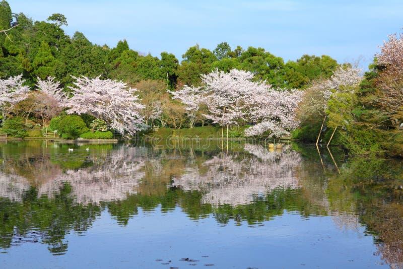 De kersenbloesem van Kyoto royalty-vrije stock afbeeldingen