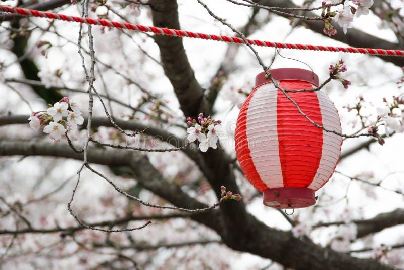 de kersenbomen springen 2019 op stock fotografie