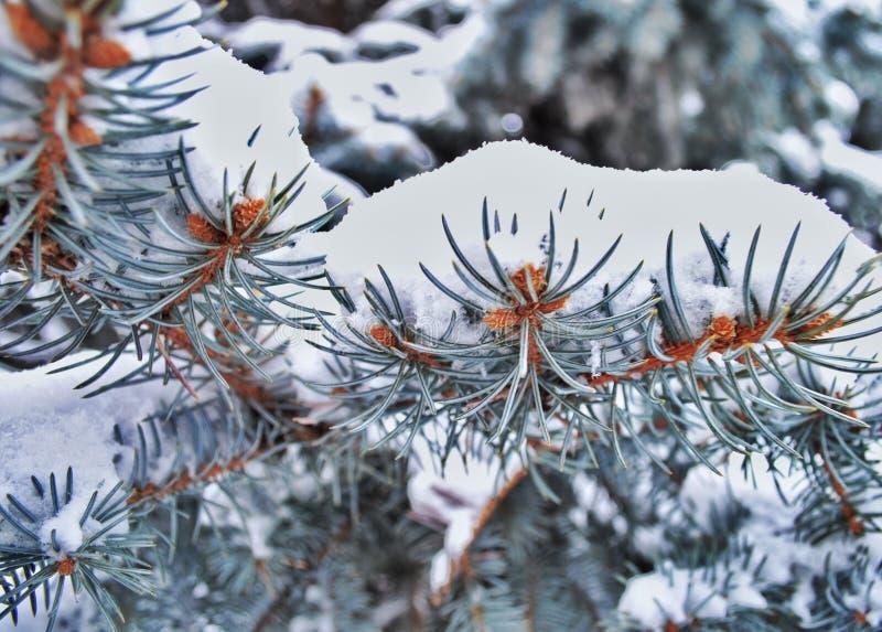 De kerstboom is behandeld met sneeuw stock afbeeldingen