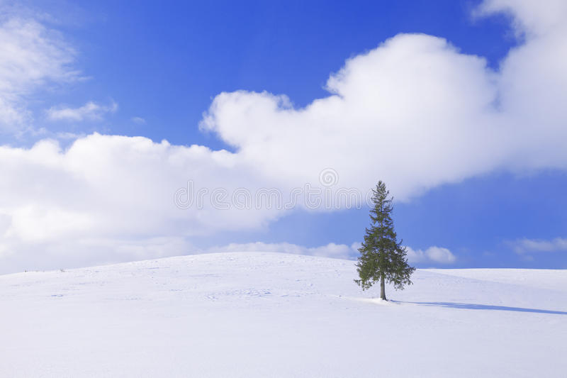 De Kerstboom in Biei royalty-vrije stock fotografie