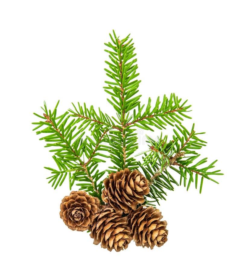 De kerstboom vertakt zich de witte sparren van de achtergrondpijnboomtwijg stock afbeeldingen
