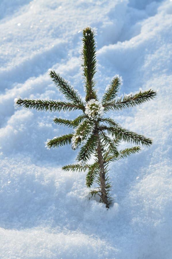 De kerstboom voelt koud royalty-vrije stock afbeeldingen