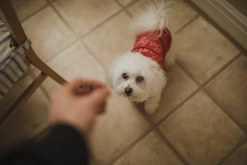 De Kerstmishond behandelt stock fotografie