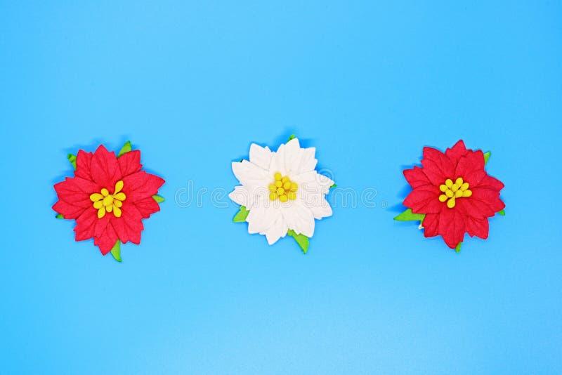 De Kerstmispoinsettia bloeien close-up op een blauwe achtergrond, Kerstmisachtergronden, Kerstmissamenstelling, een plaats voor t royalty-vrije stock fotografie