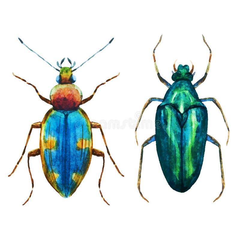De kever van het waterverfinsect royalty-vrije illustratie