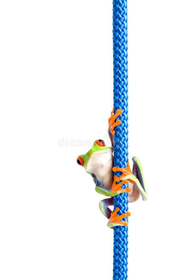 De kikker op een kabel isoleerde wit stock fotografie