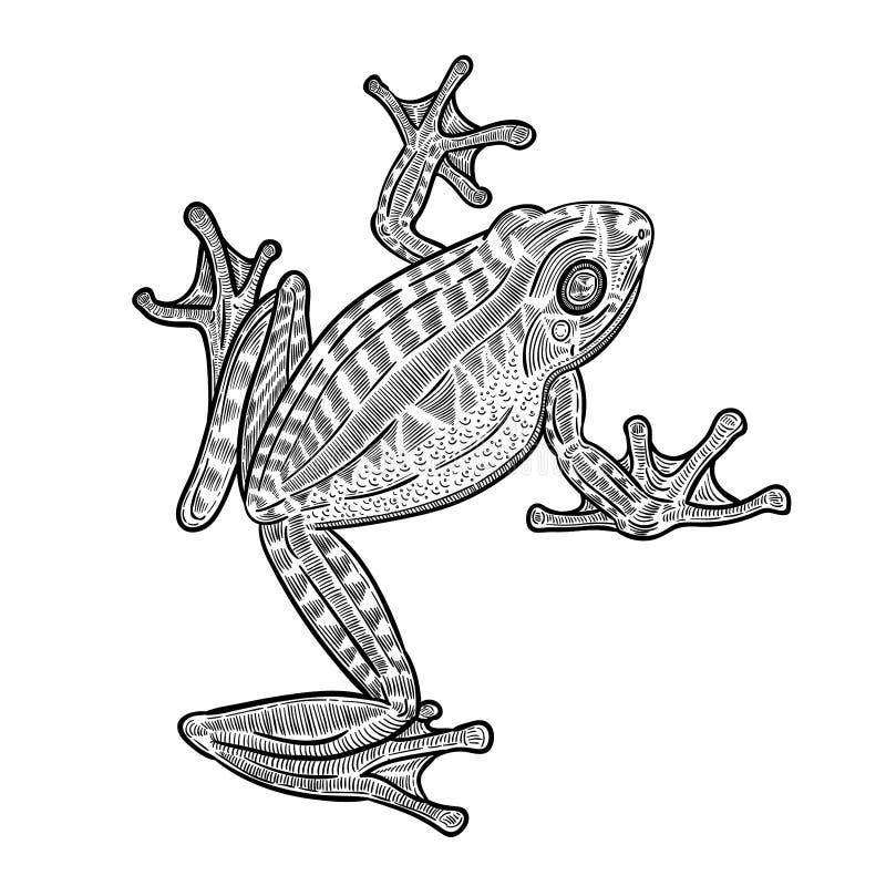 De kikkerillustratie van de lijnkunst royalty-vrije illustratie