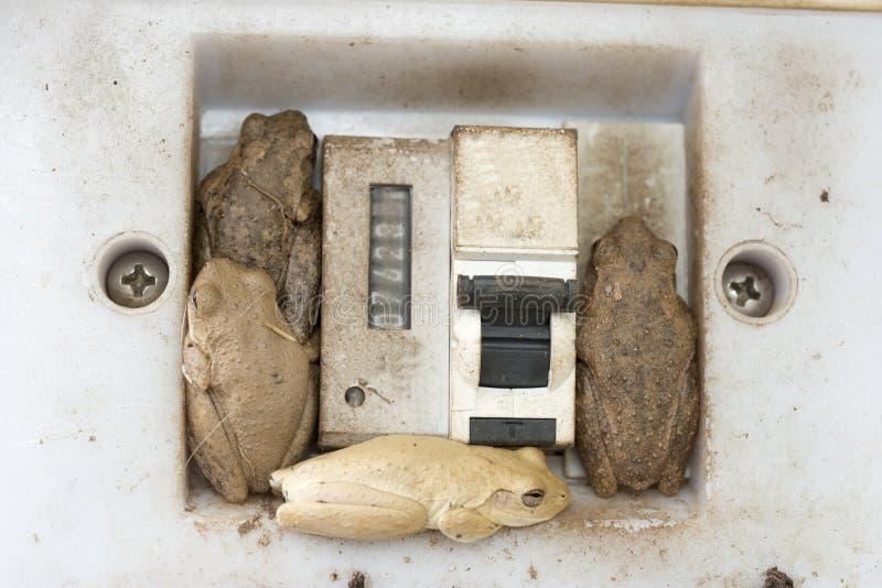De kikkers en de rietpadden maken een huis in een lichte schakelaar royalty-vrije stock afbeeldingen