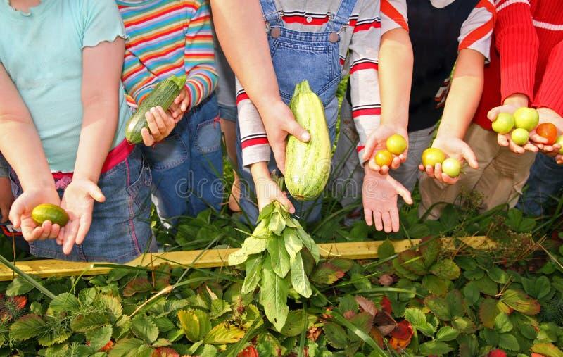 De kinderen houden groenten stock afbeelding