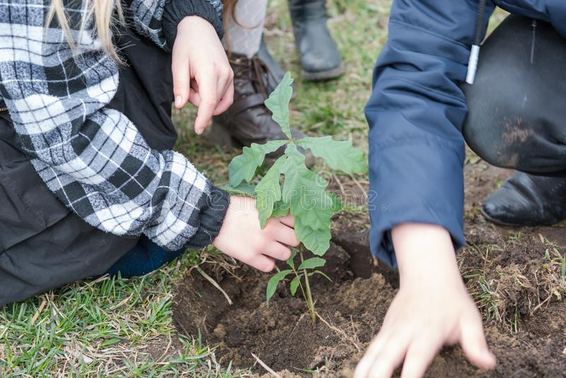 De kinderen planten bomen Kinderen geplante eiken landscaping Om een boom te planten stock afbeeldingen