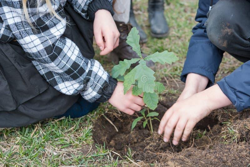 De kinderen planten bomen Kinderen geplante eiken landscaping Om een boom te planten royalty-vrije stock foto's