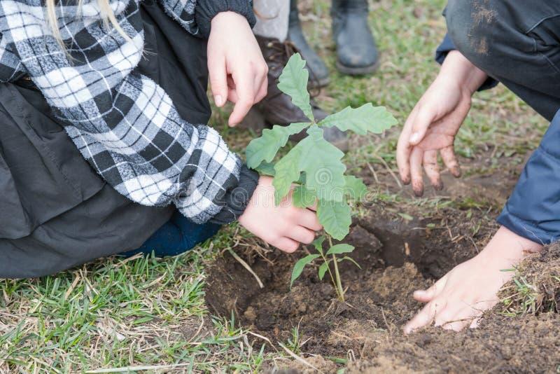 De kinderen planten bomen Kinderen geplante eiken landscaping Om een boom te planten royalty-vrije stock afbeelding