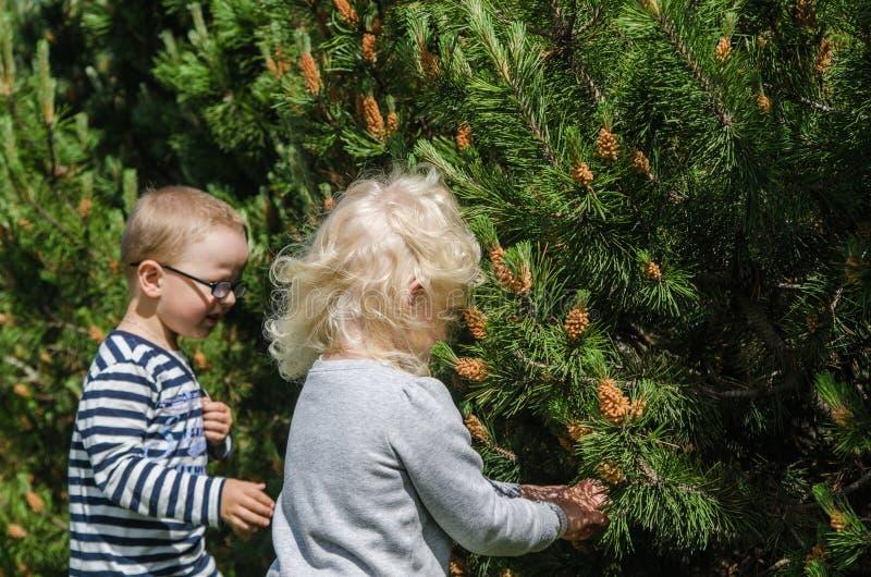 De kinderen verzamelen pijnboomknoppen royalty-vrije stock fotografie