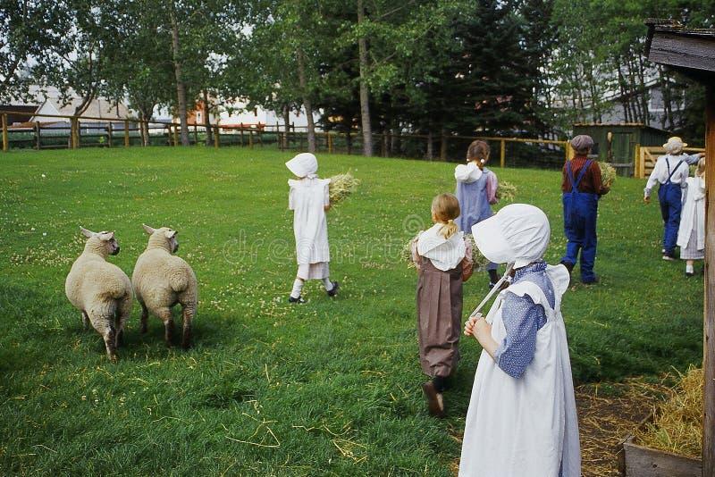 de kinderen voeden dieren stock afbeelding