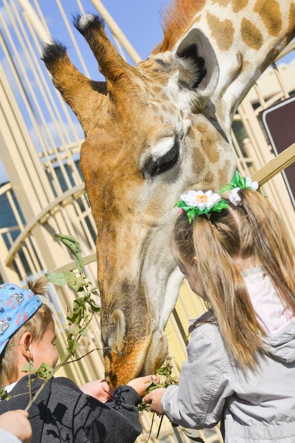 De kinderen voeden een giraf bij de dierentuin Weinig jongen en meisje voeden dieren bij de dierentuin royalty-vrije stock afbeeldingen
