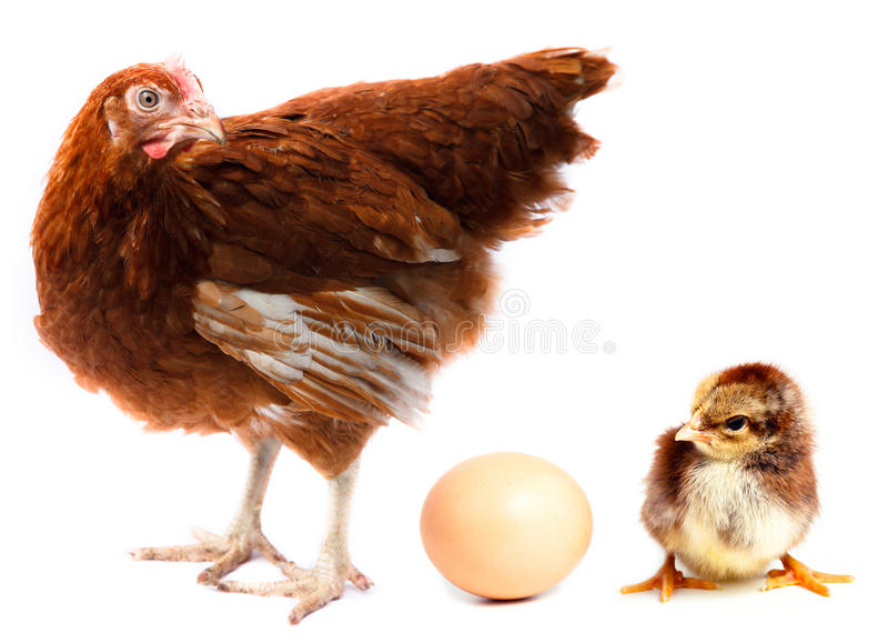 De kip, het kuiken en het ei van de kip. royalty-vrije stock afbeelding
