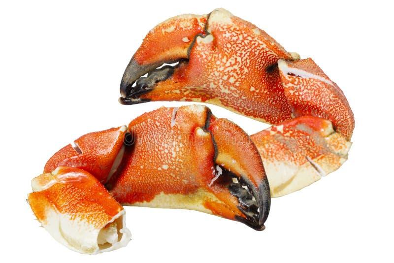 De Klauwen van de rotskrab stock afbeeldingen
