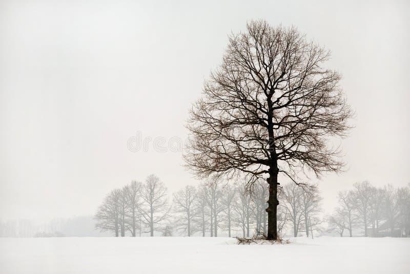 De kleding van de winter royalty-vrije stock foto's