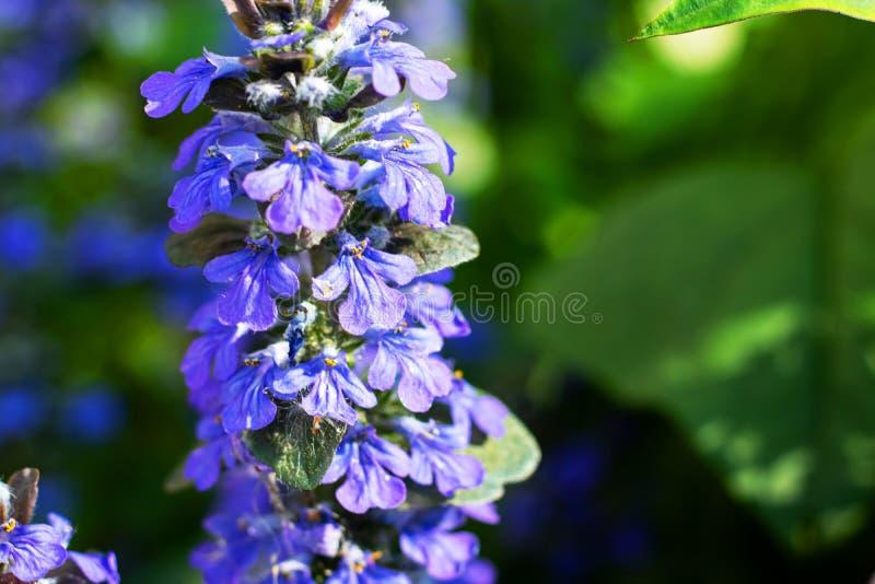 De kleine blauwe bloemen op een tak sluiten omhoog royalty-vrije stock afbeeldingen