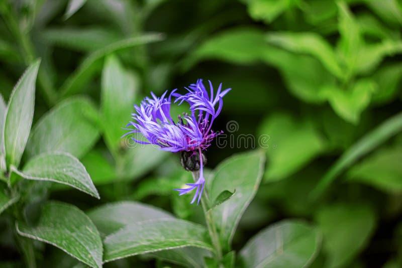 De kleine blauwe bloemen op een tak sluiten omhoog stock foto's