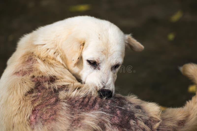 De kleine Hond royalty-vrije stock foto