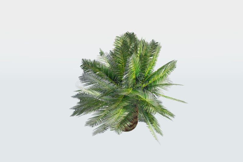 De kleine Installatie van de Palm stock foto's