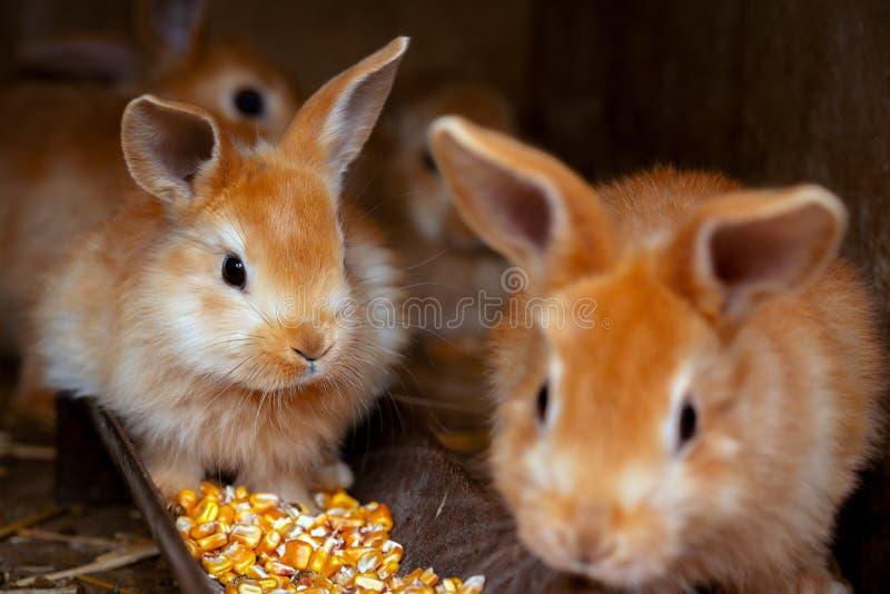 De kleine konijnen royalty-vrije stock fotografie