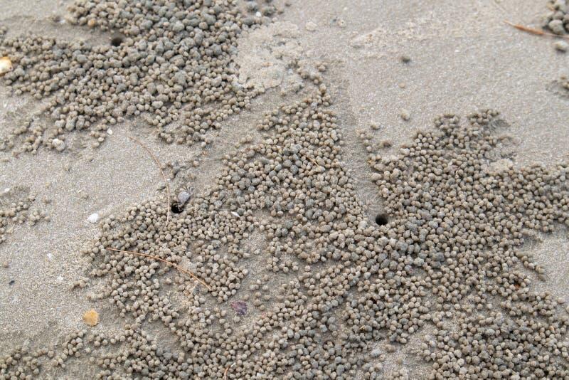 De kleine krab gaat onderaan zijn gat op het strand stock afbeelding