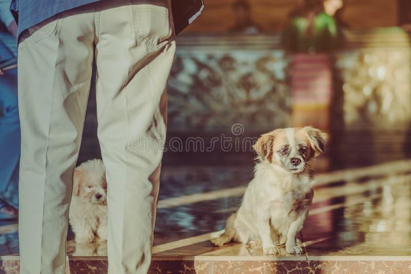 De kleine leuke honden wachten om gasten voor het hotel welkom te heten royalty-vrije stock foto's