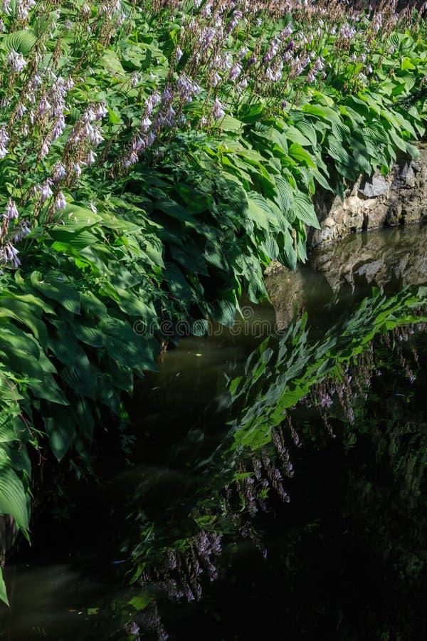 De kleine oppervlakte van het de zomermeer met de bezinningen van bloeminstallaties royalty-vrije stock foto's