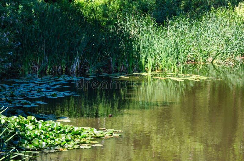 De kleine oppervlakte van het de zomermeer met groene bezinningen royalty-vrije stock fotografie