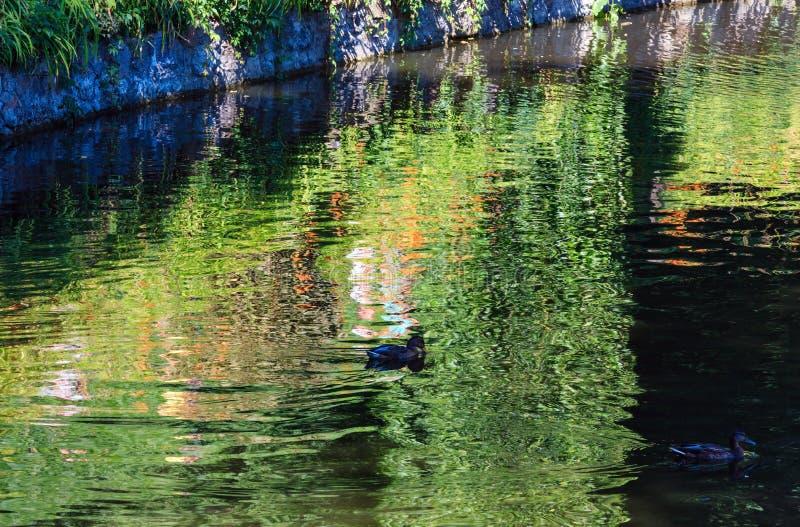 De kleine oppervlakte van het de zomermeer met groene bezinningen stock foto's
