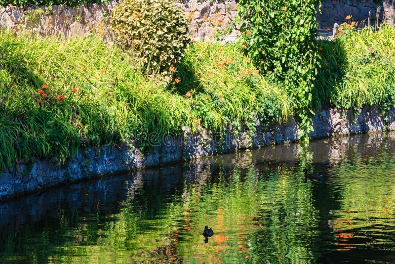 De kleine oppervlakte van het de zomermeer met groene bezinningen royalty-vrije stock foto